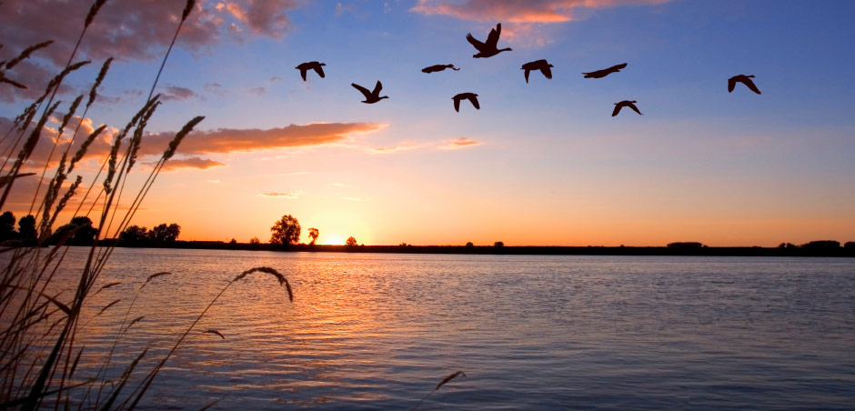 slider-geese